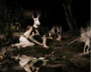 A Midsummer Night's Dream - 2002 - Mat Collishaw - © Mat Collishaw 2007