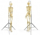 Damien Hirst - Male and Female Pharmacy Skeletons - 1998