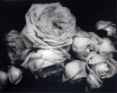 Heavy Roses - Voulangis, France, 1914 - Edward Steichen - Courtesy Howard Greenberg Gallery, New York © Joanna T. Steichen