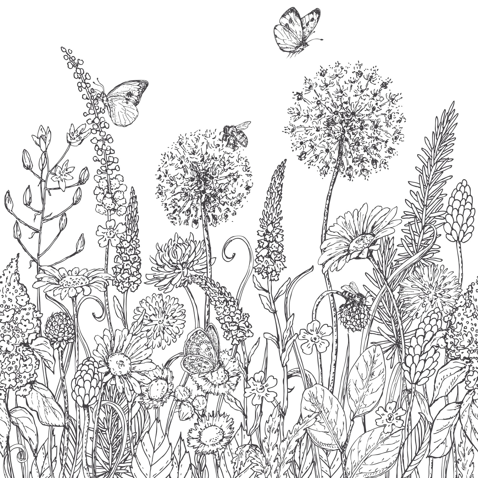 1000 images about coloring page on pinterest for Fiori grandi da colorare
