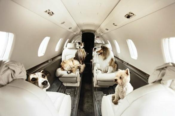 Private Air Travel For Dogs