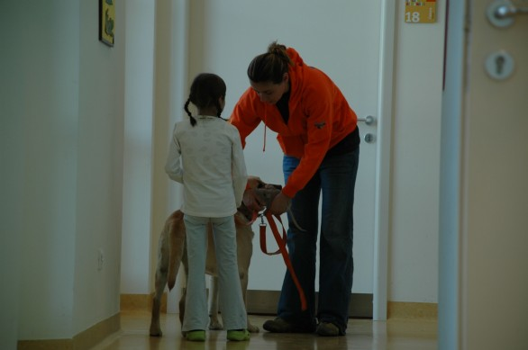 cani pet therapy meyer
