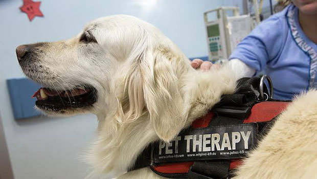 Pet therapy in ospedale a Torino