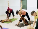Some poses of yoga for dogs