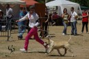 expo canine