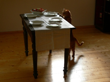 cat and the table