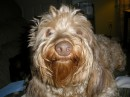 Some of the ugliest dog in the world