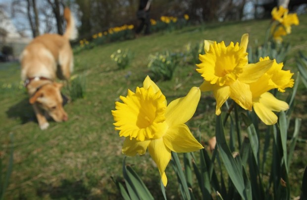Spring Weather Reaches Germany