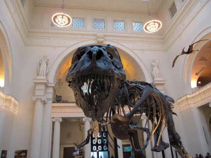 Sue,  il T-Rex al Field Museum di Chicago