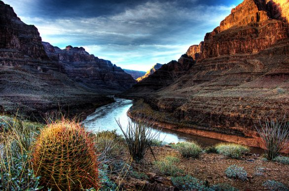 Un cactus nel Grand Canyon