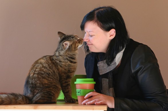 First Australian Cat Cafe Opens In Melbourne